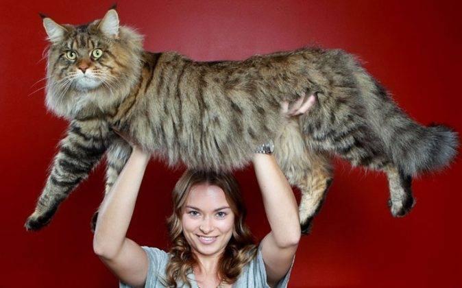 До какого возраста растут кошки и коты