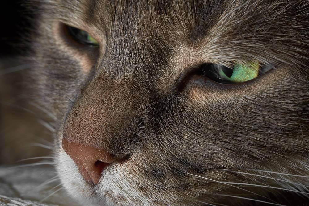 Анестезия для кошек (оценка рисков и их минимизация)