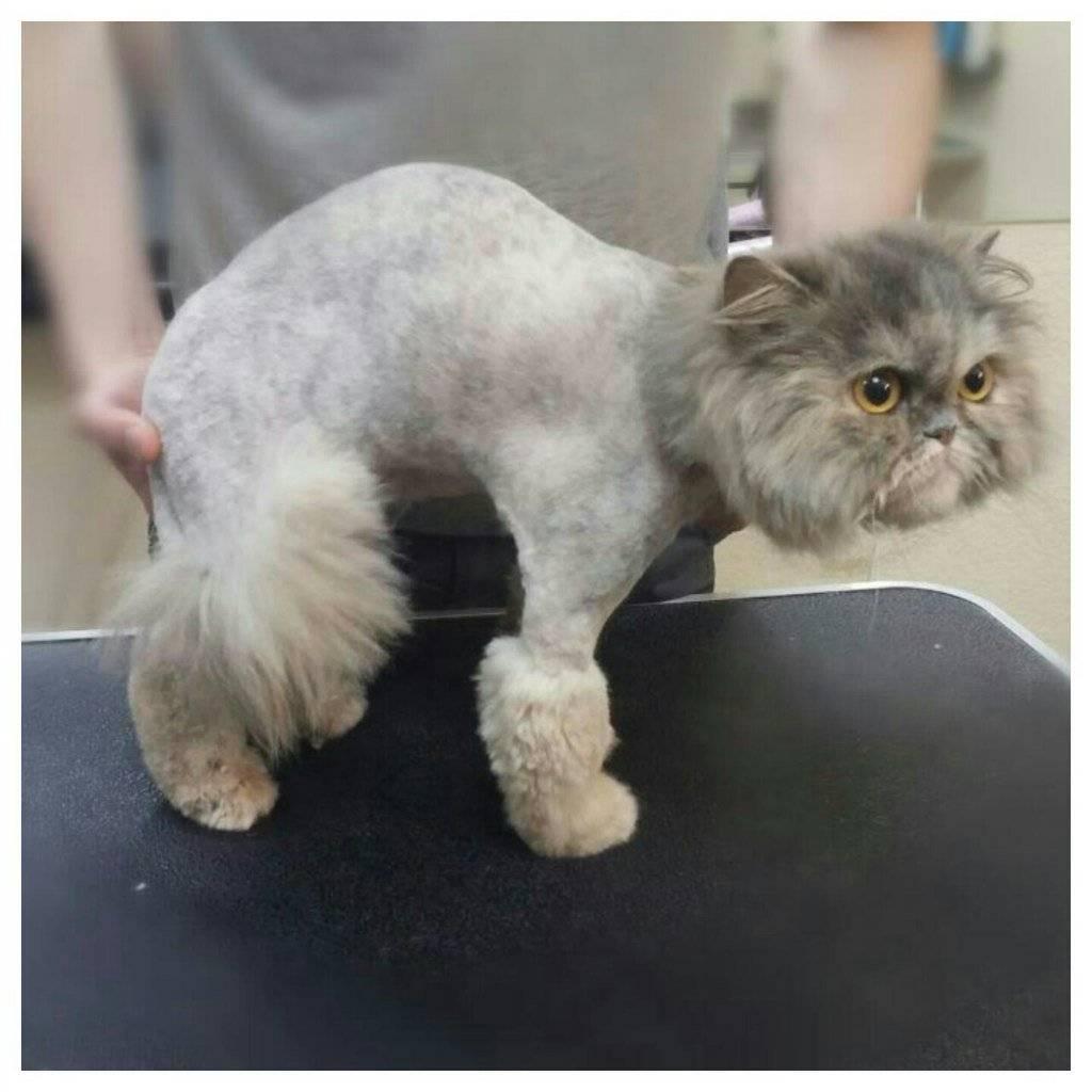 Виды стрижек длинношерстных и короткошерстных кошек