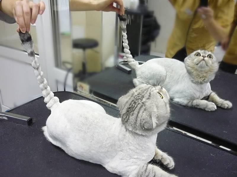 Как стричь кота в домашних условиях