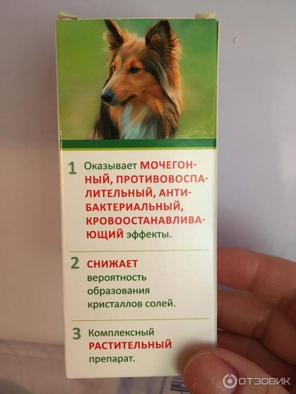 Уролекс (капли урологические) для кошек и собак   отзывы о применении препаратов для животных от ветеринаров и заводчиков