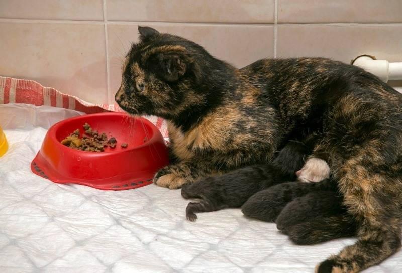 Кошка после родов периодически мечется по комнате и мяукает — сложные вопросы простые ответы