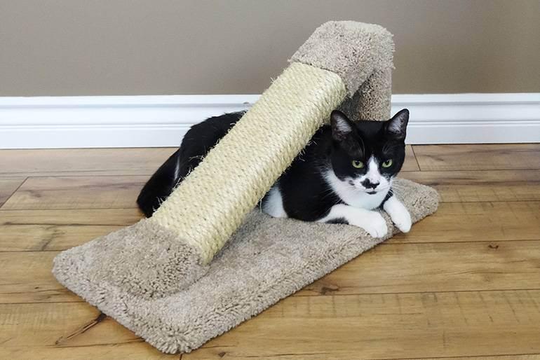 Как приучить котенка к когтеточке: быстро и эффективно