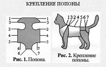 Как завязать кошке попону? как ее надеть после операции? как правильно завязывать после стерилизации? инструкции и схемы