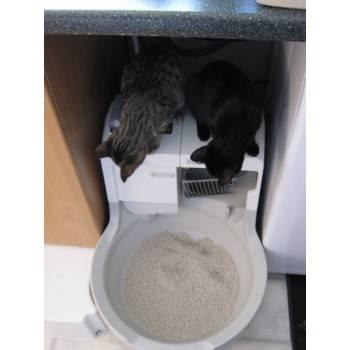Кошачий туалет: автоматический со сливом в канализацию, самоубирающийся, сделанный своими руками - kotiko.ru