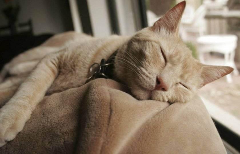 Можно ли усыпить кошку, кота или котенка без показаний, как это сделать в домашних условиях безболезненно?
