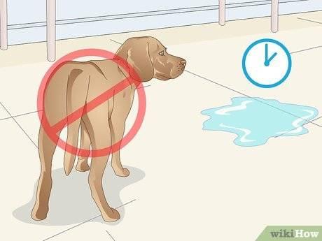Почему моча у кота не держится, что делать в домашних условиях: причины, симптомы и лечение недержания