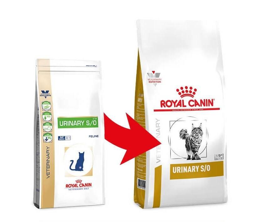 Сухой корм для кошек при мочекаменной болезни