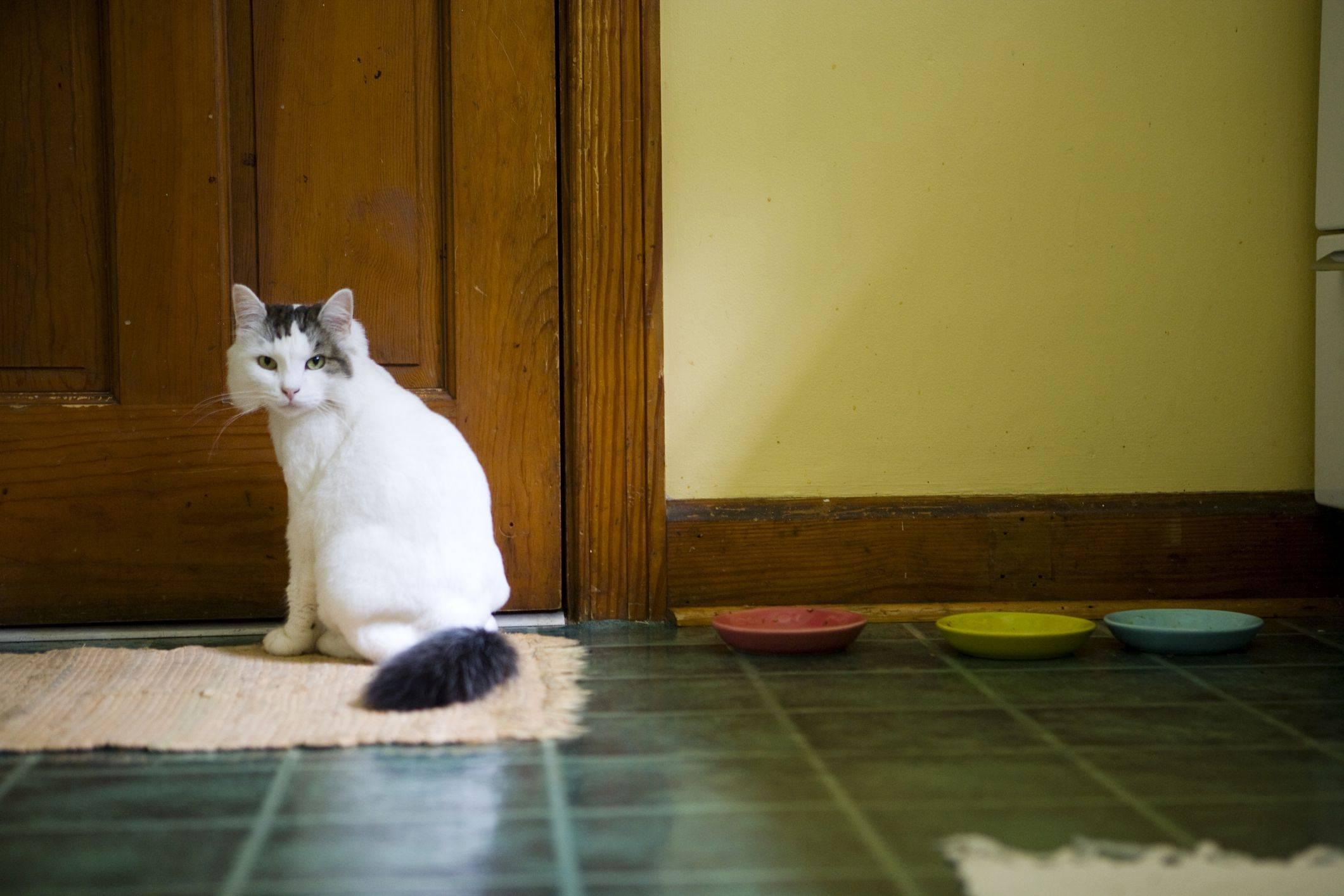 Почему кот в доме постоянно смотрит в один угол и орет