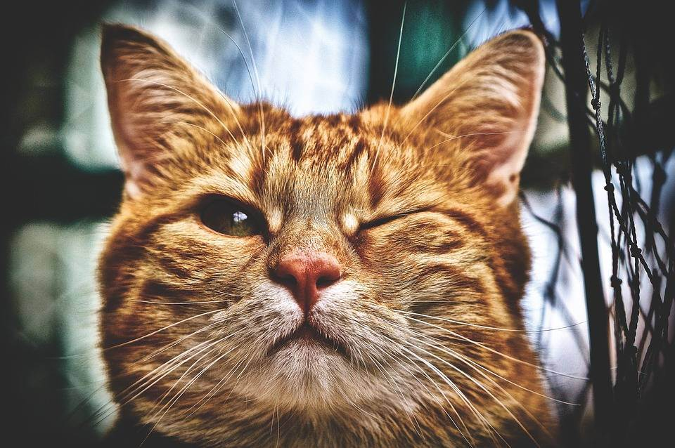 Почему метят коты и кошки в квартире