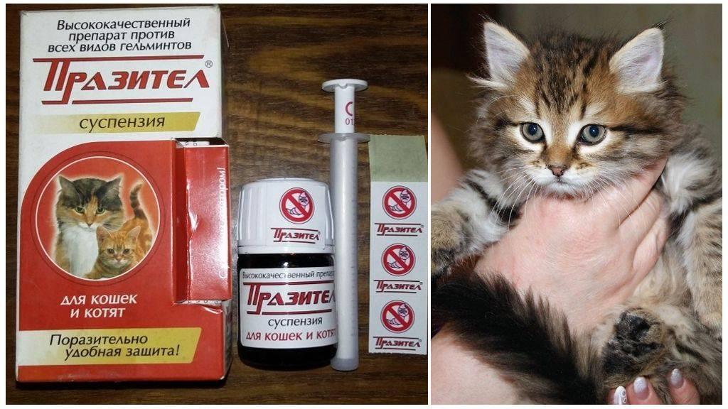 Прател для кошек: инструкция и показания к применению | отзывы, цена