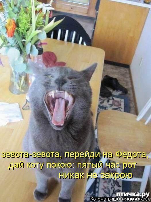 Почему кошки зевают когда их гладят. почему коты зевают