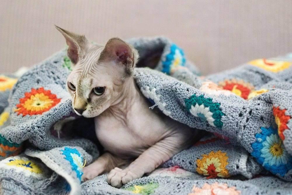 Зачем кошка прячется под одеяло? - zhivomag
