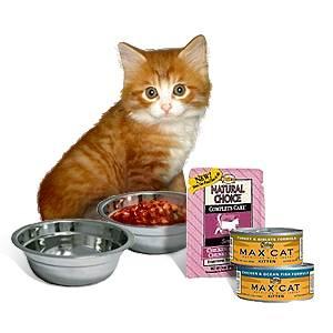 Какой сухой корм для кошек самый лучший по мнению ветеринаров