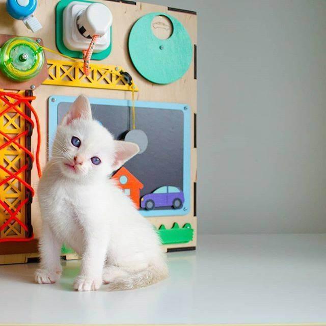 Цель исследования: изучить особенности поведения и повадок домашней кошки. - презентация
