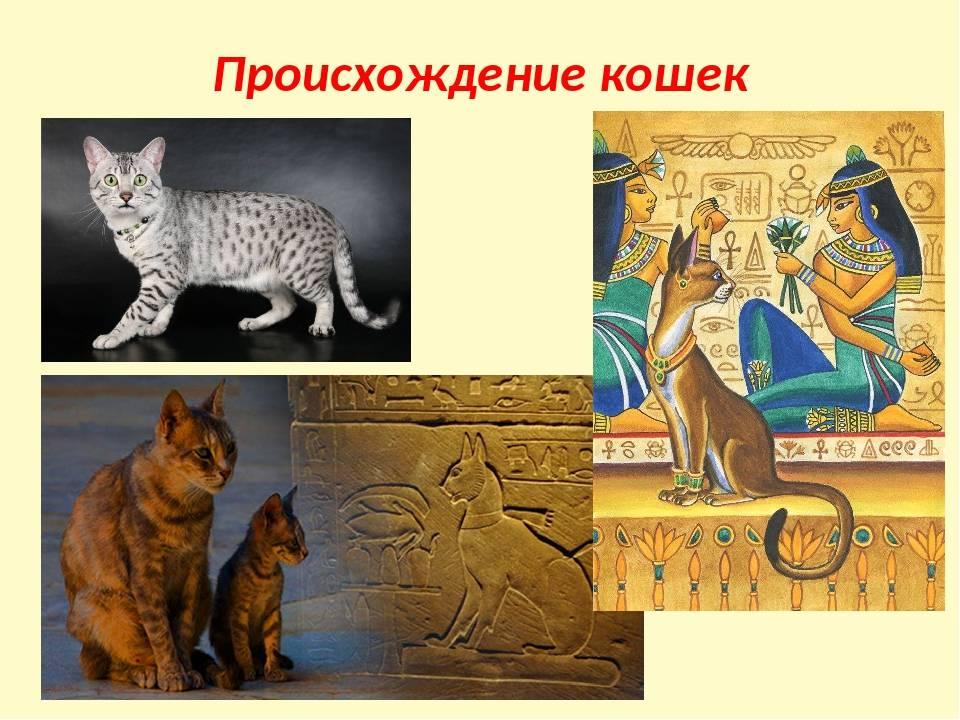 Версии о происхождении кошек