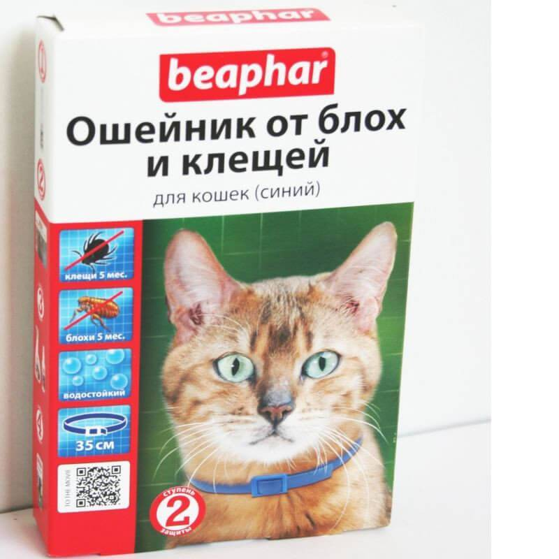 Ошейник от блох и клещей для кошек: за, против и правила безопасности