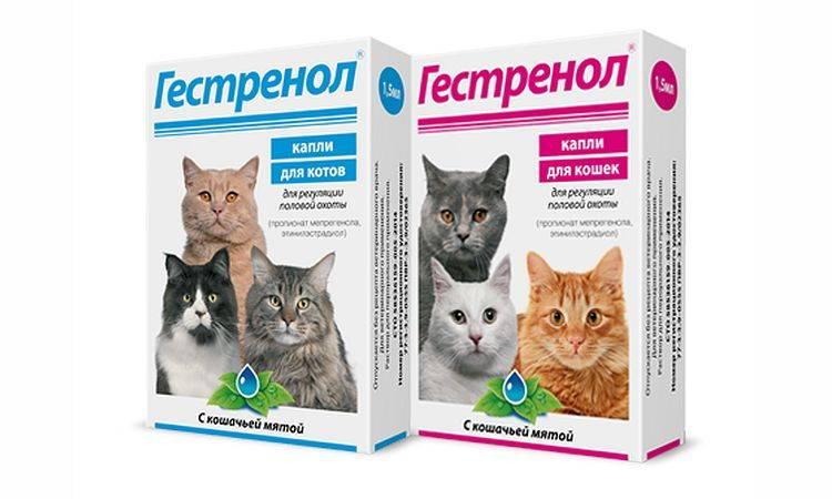 Гестренол, капли и таблетки для кошек и котов: инструкция по применению препарата