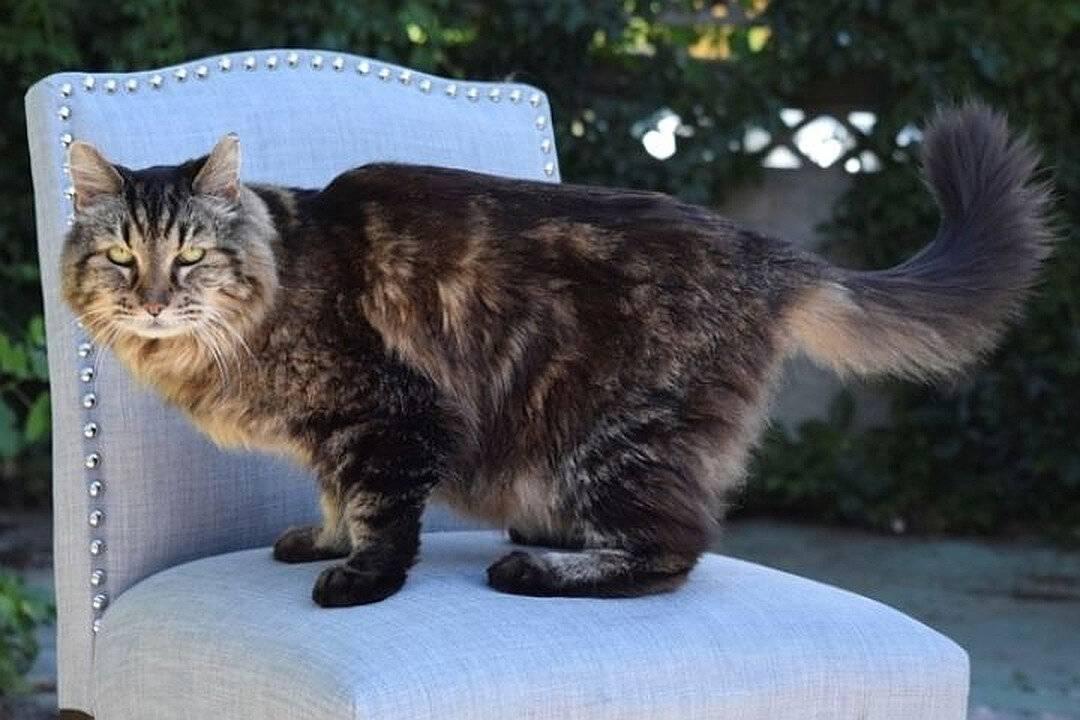 Коты-долгожители: 10 пород, который долго живут  | мур тв