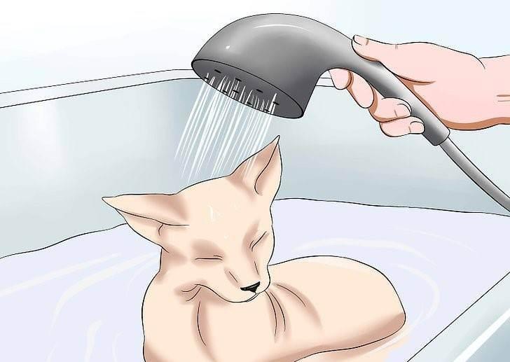 Шампунь для сфинксов ? какой выбрать для кота