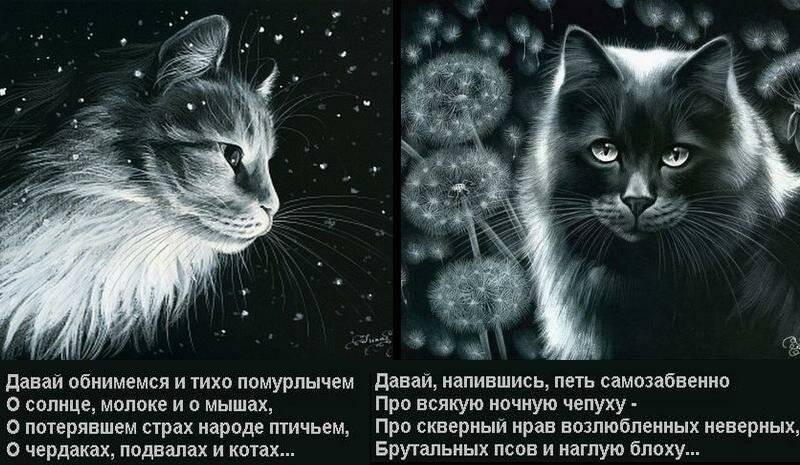 Что и как помнят кошки?