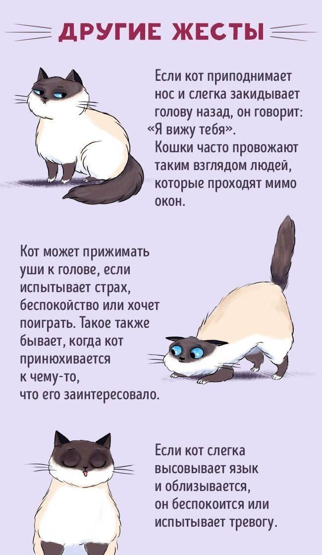Кошачий язык: как понять своих кошек и котов, как человеку поговорить с питомцем — 4 лапки