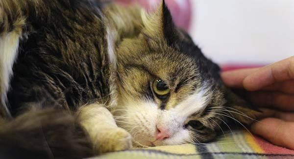 Симптомы бешенства у кошек на ранних сроках