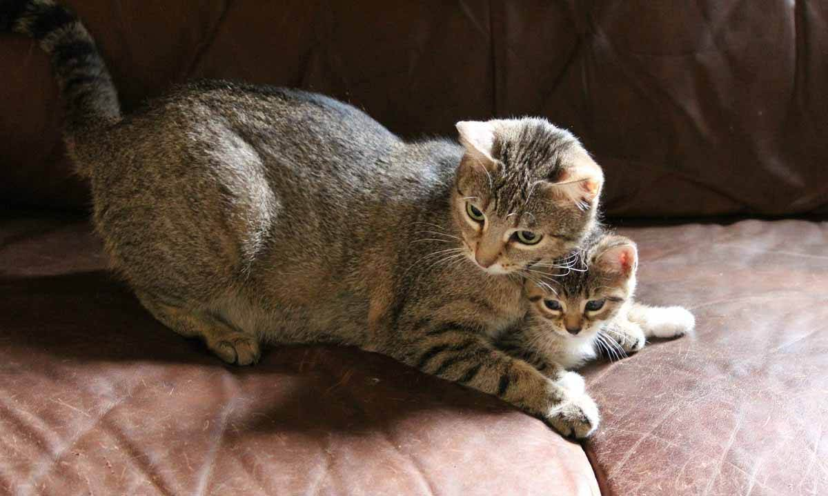 Как ухаживать за новорождёнными котятами с кошкой: правила и советы
