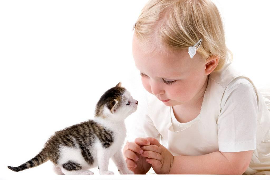 Симптомы аллергии на кошачью шерсть у младенцев: как они выглядят