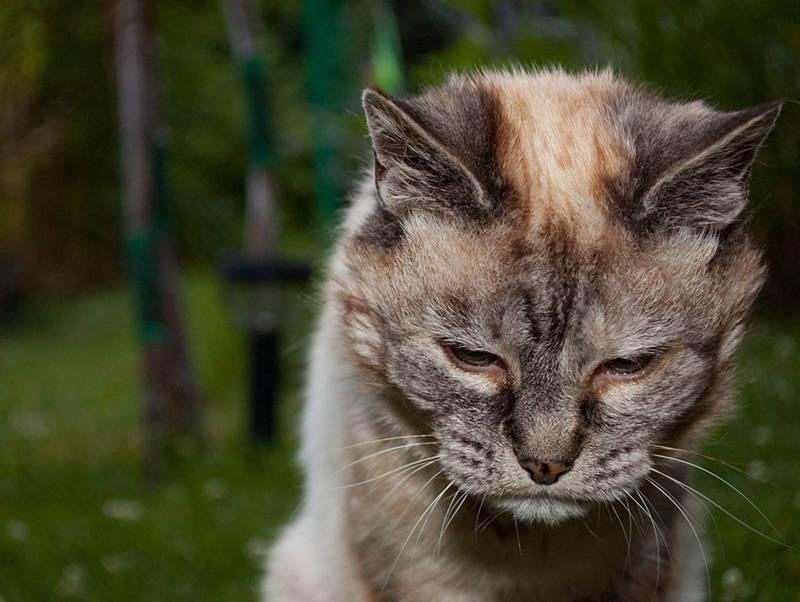 Как похоронить кошку зимой. где и как правильно похоронить кошку (деликатная тема) как похоронить кошку зимой самому