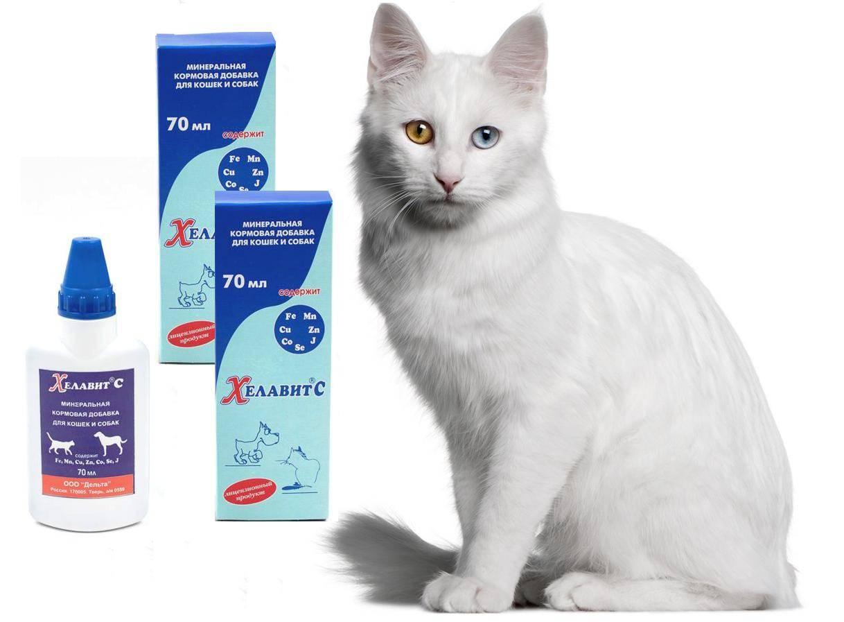 ᐉ хелавит с для кошек и собак: инструкция по применению, описание и фармокологические свойства - kcc-zoo.ru