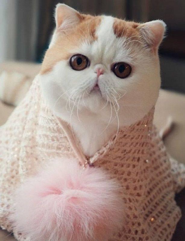 Самые милые породы кошек: 25 пород, которые вас поразят своей красотой - мир кошек