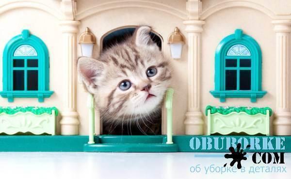 6 способов, как избавиться от запаха кошачьей мочи с одежды, вещей, обуви, дивана, пола