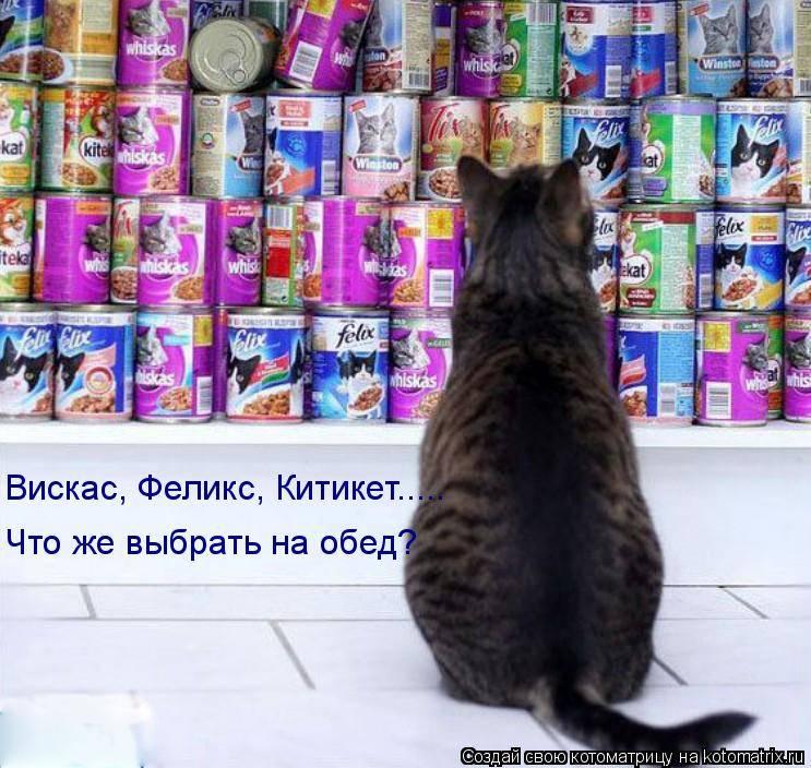 Как отучить кошку от корма и приучить к домашней еде?