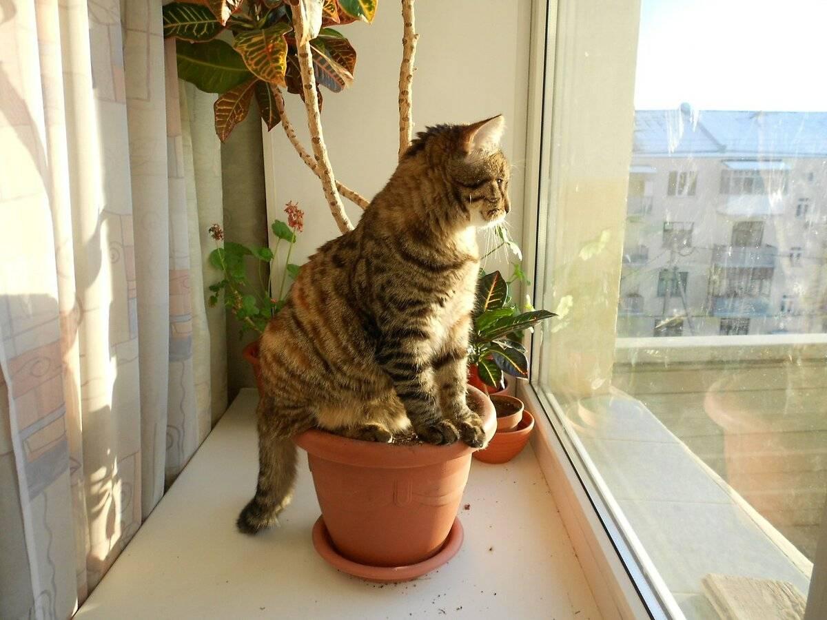 Почему у вас дома никак не могут прижиться кошки