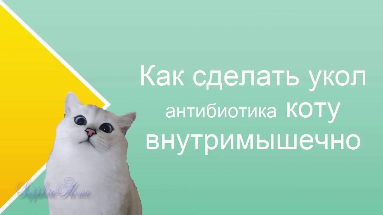 Как правильно сделать укол кошке или коту?