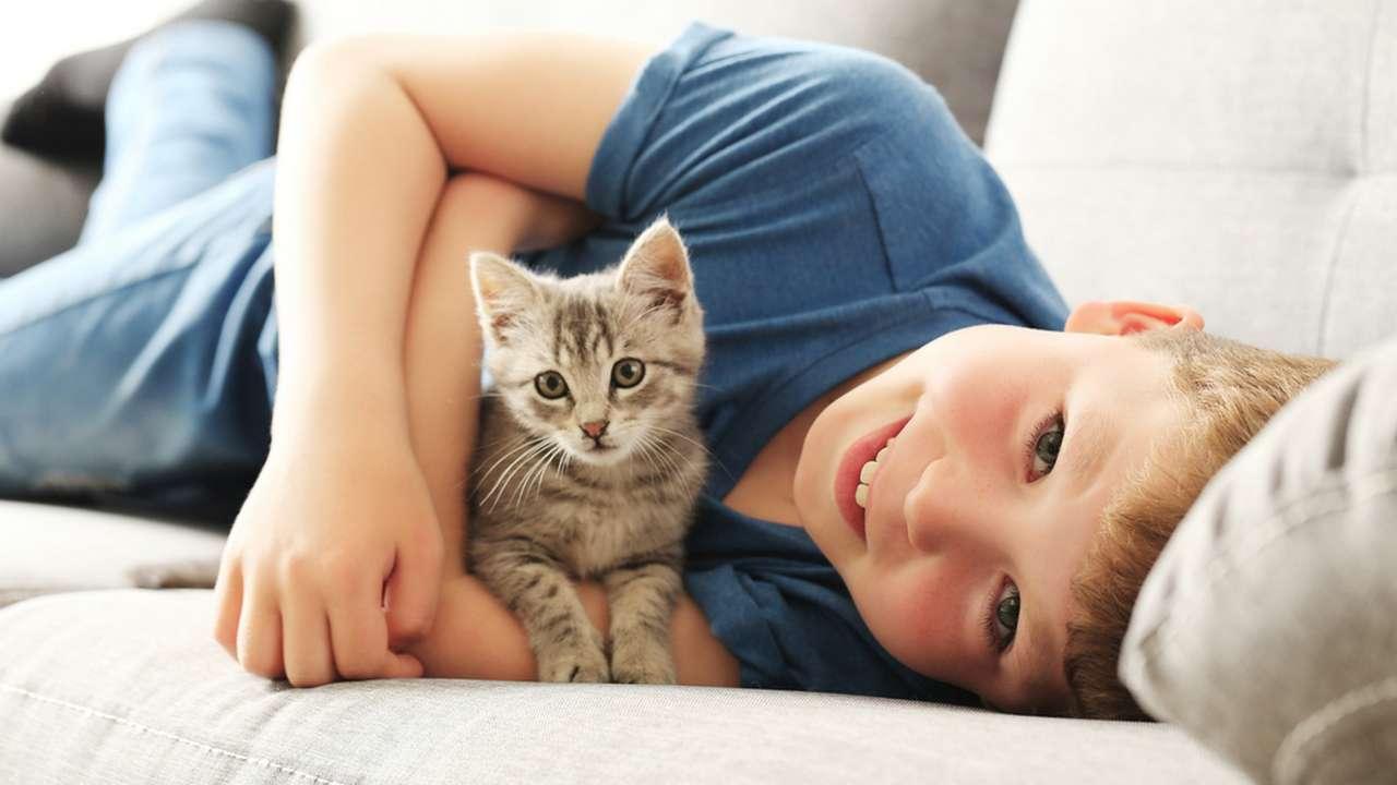 Как подружить кошку с собакой: практически советы