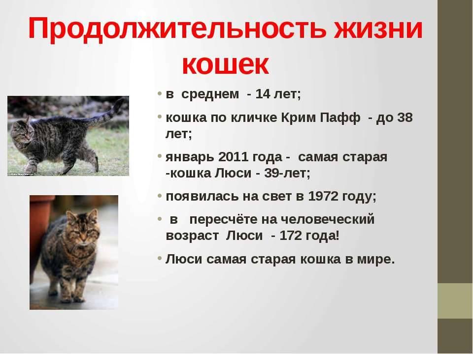 Сколько живут кошки? средняя продолжительность жизни котов в домашних условиях. сколько лет кошке по человеческим меркам?