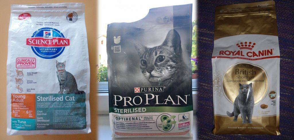 Лучший влажный корм для домашних кошек