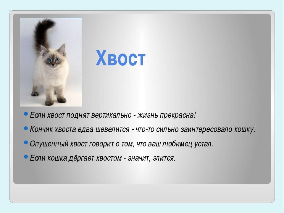 Кошка нервничает: симптомы нервных болезней и расстройств (тик, невроз, срыв), почему кошка нервничает в машине, стала нервной