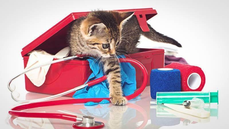 Кошка не ест корм и натуральную еду: причины, последствия и необходимая помощь