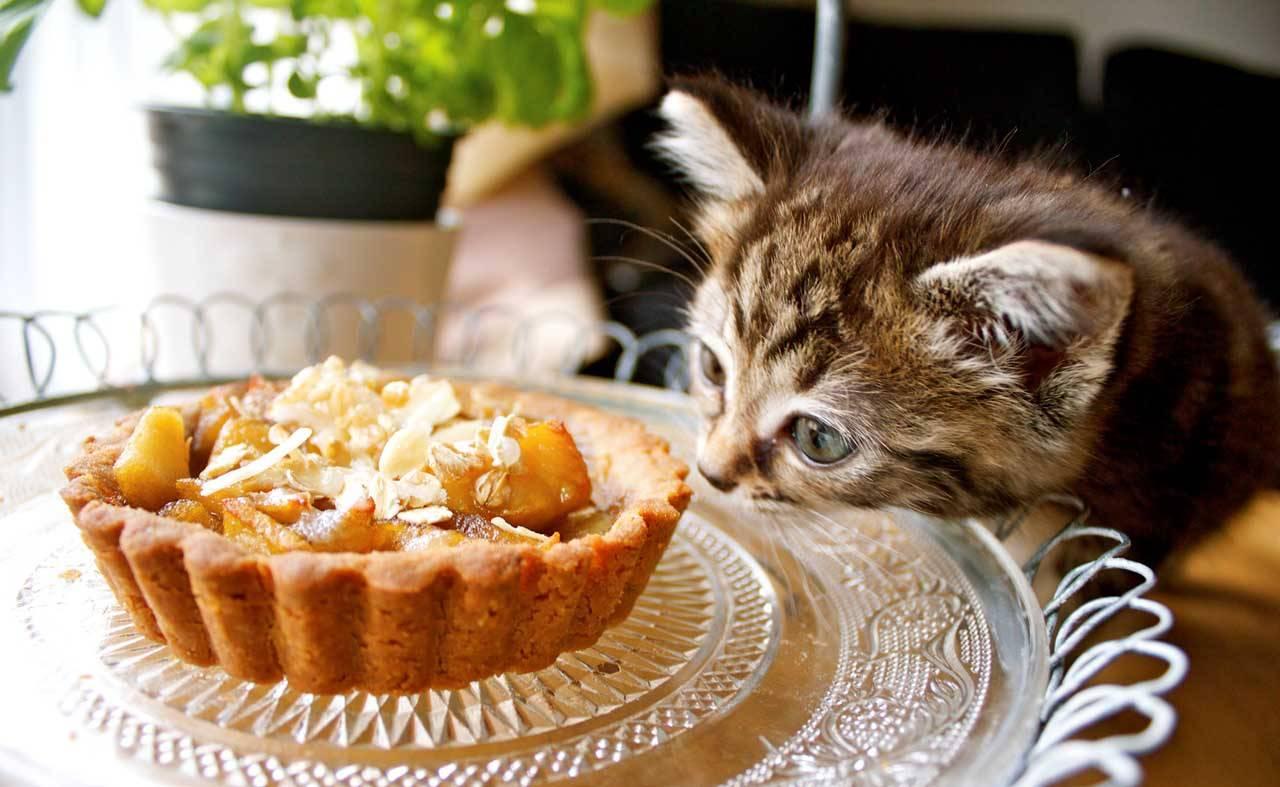 Можно ли кошкам сладкое: шоколад, мороженное, печенье, мёд