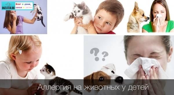 Аллергия на кошку у грудничка: симптомы и лечение
