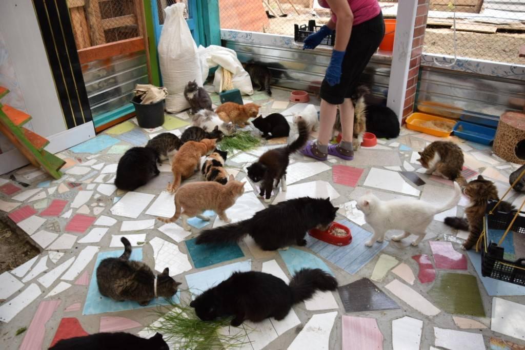 Кошки в добрые руки бесплатно в москве