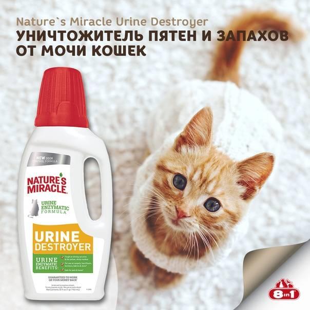 Как избавиться от запаха кошачьей мочи: примеры народными средствами и другими