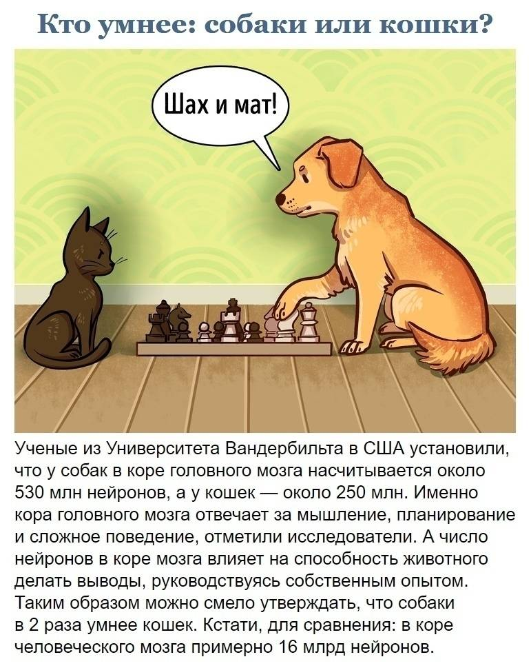 Кто умнее кот или собака?