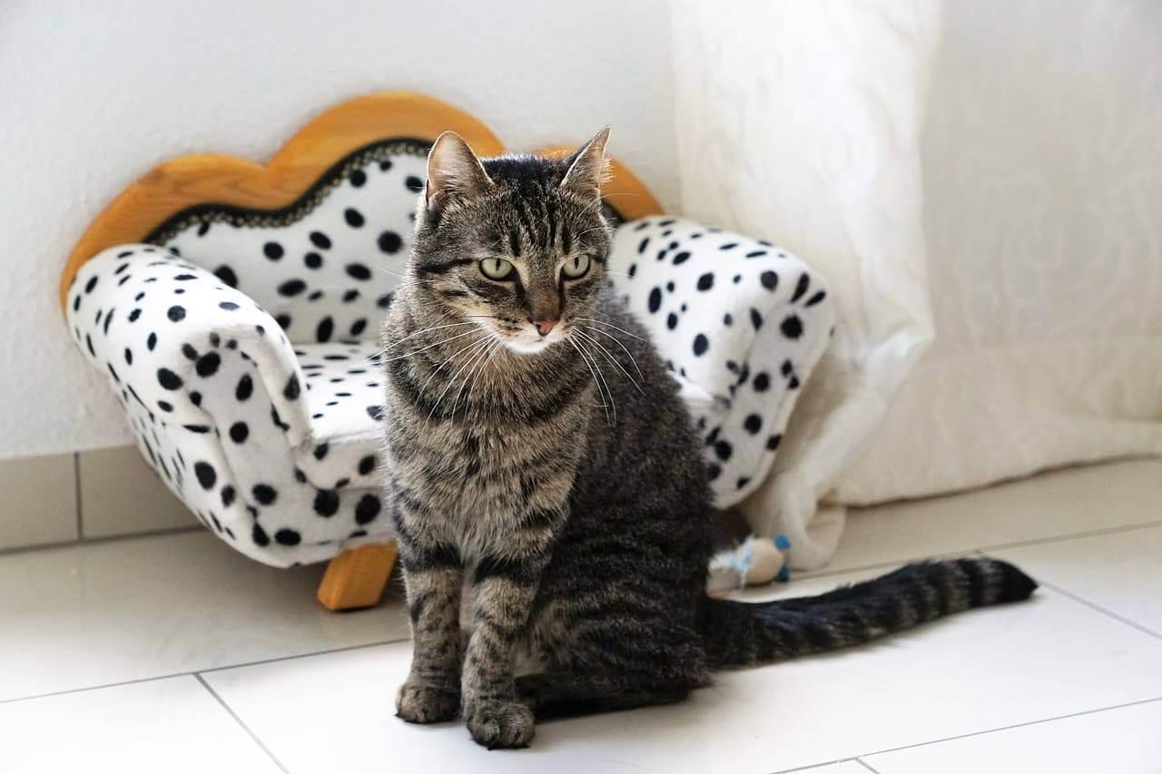 Лечение домашних животных в москве: цены, отзывы и адреса