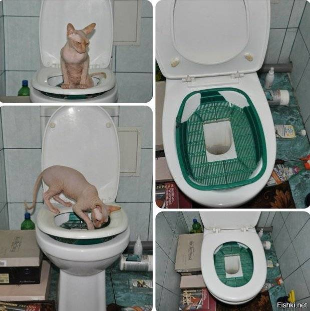 Как часто котята ходят в туалет по-большому и по-маленькому: показатели нормы (таблица), возможные проблемы и способы их решения, отзывы