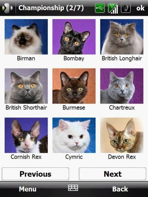 Самые злые породы кошек — агрессивные домашние кошки
