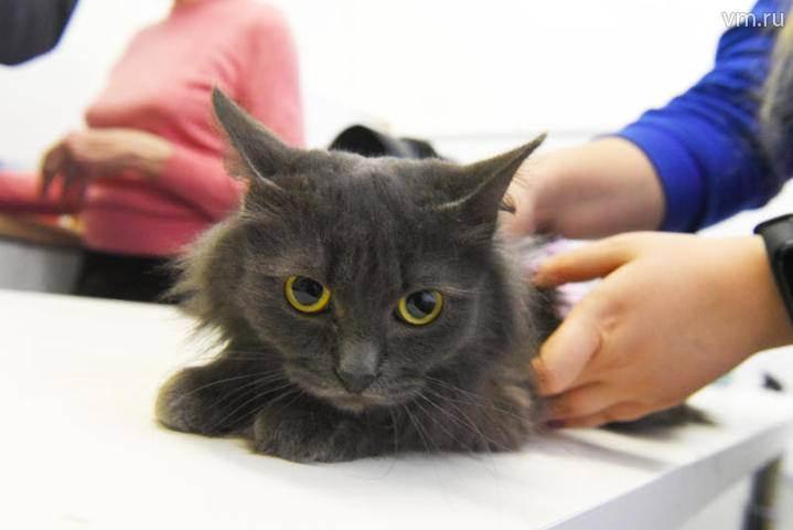 Кошки на которых нет аллергии на